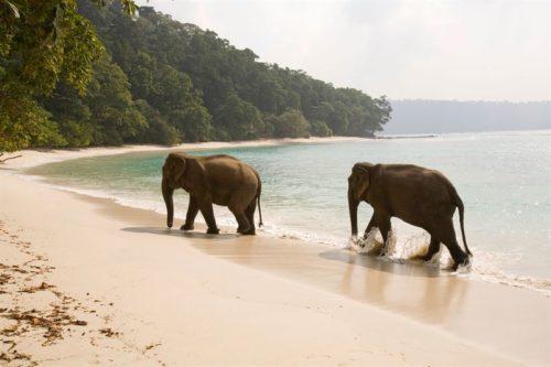 Havelock Island, Indien.